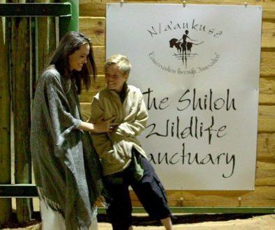 Angelina Jolie engagiert sich in der Rettung von verwaisten, afrikanischen Geparden